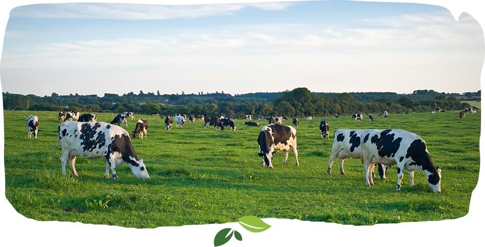 grass-fed-milk-formula1.png