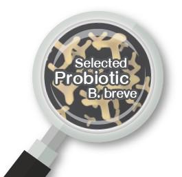 Probiotic infographic