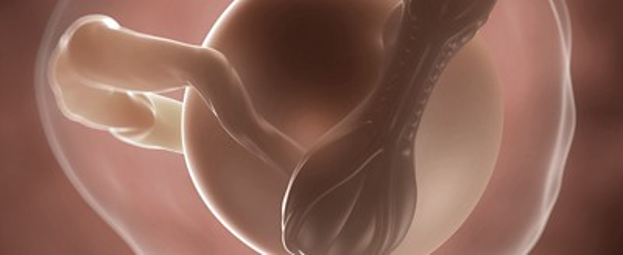 Ssw 4 embryo plazenta